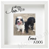 All-you-need-is-love-from-a-dog-FL001